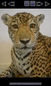 Jaguar Wallpaper Gallery screenshot 3