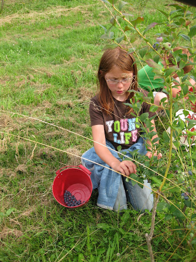 picking blueberries, sweet girl with a red bucket