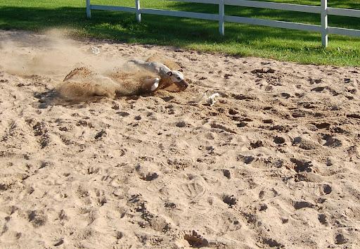 Teo stuper i sandbassenget etter filla