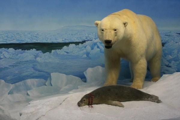 Die ausgestellten Tiere sind von echten Tieren kaum zu unterscheiden.