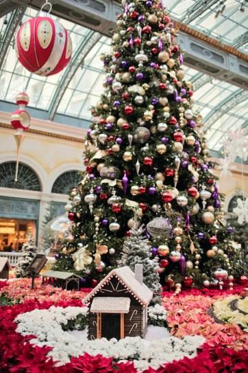 Christmas at Bellagio Botanical Gardens.