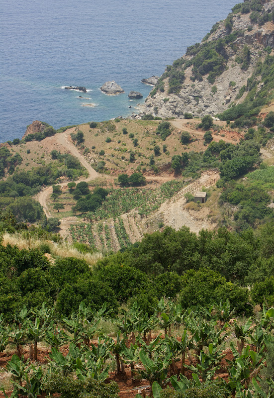 Banana Farming on the Mediterranean