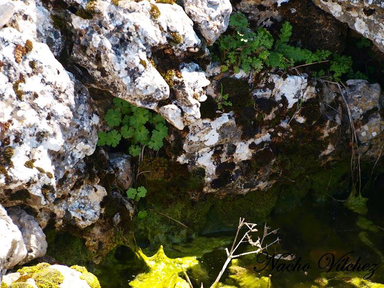 Charco del Negro - Lagunas de Sierra de Loja (Loja) 13.04.13 (4/6)