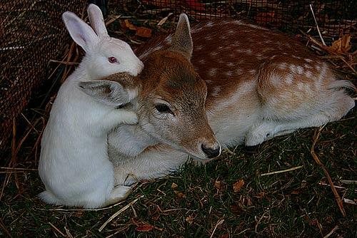 Animales cariñosos: Conejos y Venados