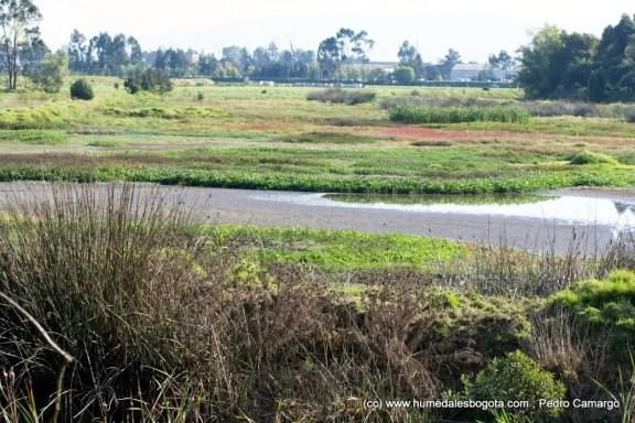 El humedal Meandro del Say se quedó sin agua, (segundo episodio). -  Fundación Humedales Bogotá