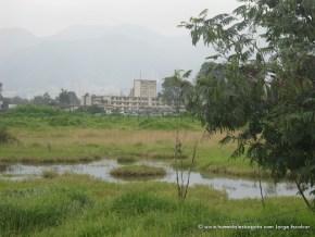 Humedal Salitre Greco visto desde la Av El Dorado