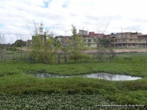 Espejo de agua eb el Humedal Jaboque