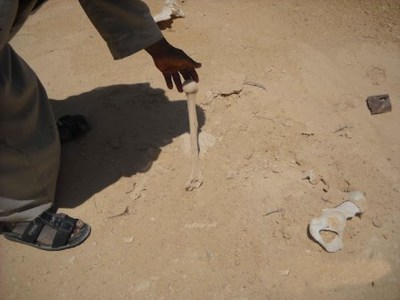 The remains of Egyptian POWs in North Sinai