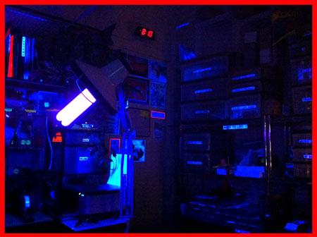Monster Blacklight 4 Prong Black Light Bulb 100 Watts