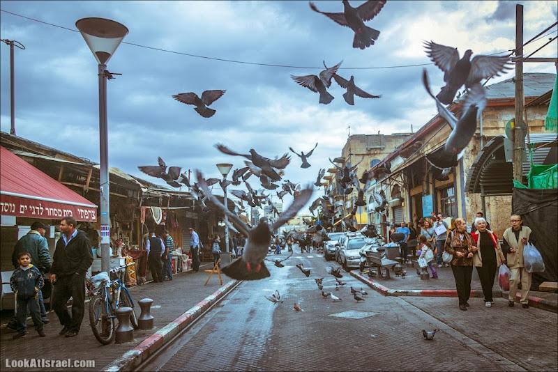 Голуби апокалипсиса