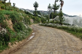 Road leading to orchard
