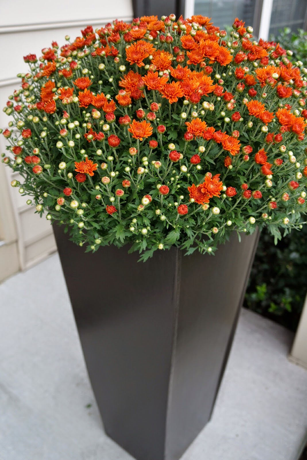 Tall Plant Containers