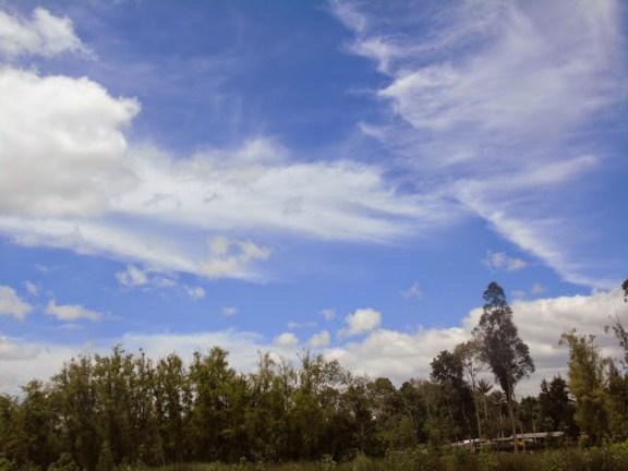Panorama del humedal Jaboque