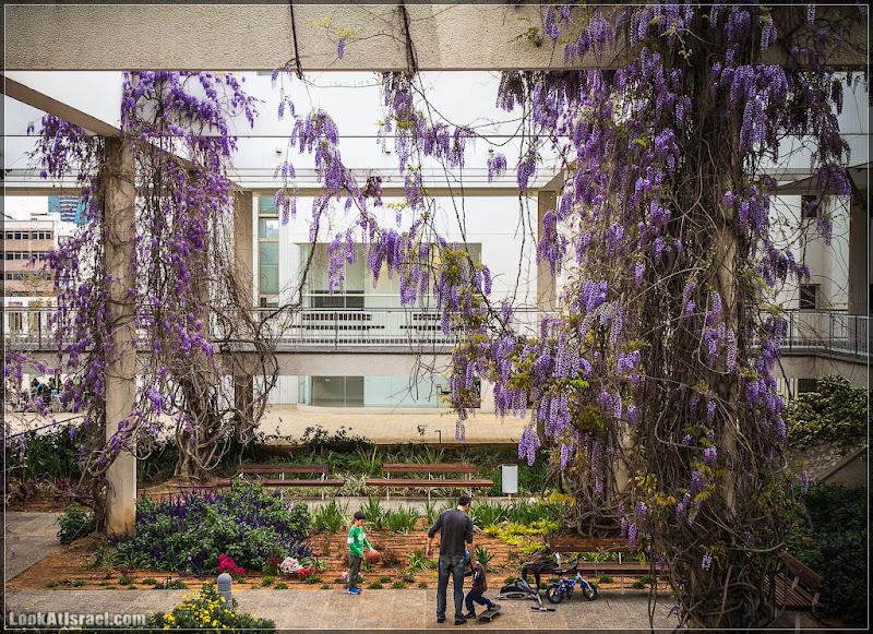 Одно фото / Тель Авив, театр Габима в сиреневом
