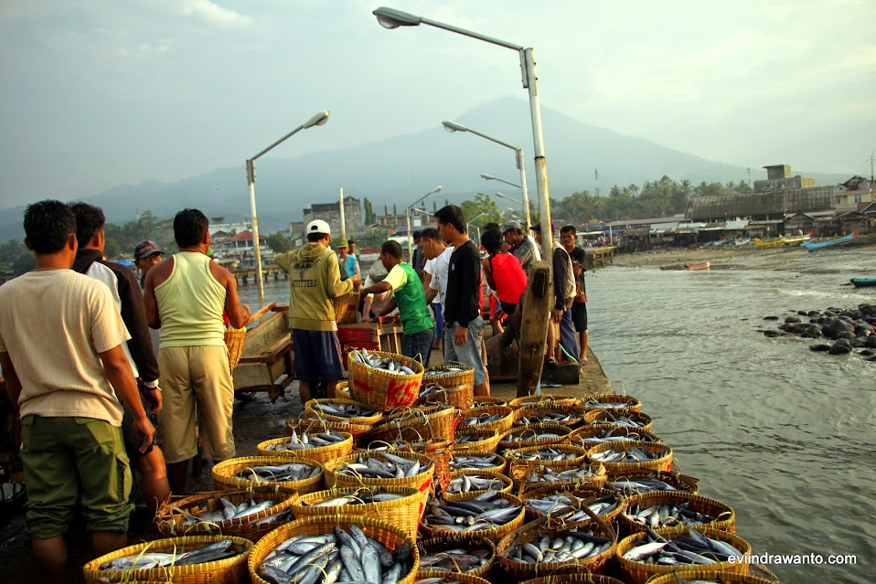 kesibukan di tempat pelelangan ikan tanggamus