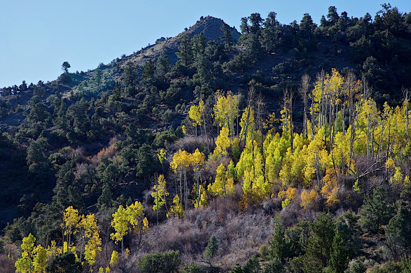 Voyagers: Eastern Sierra in Fall 週末賞秋色