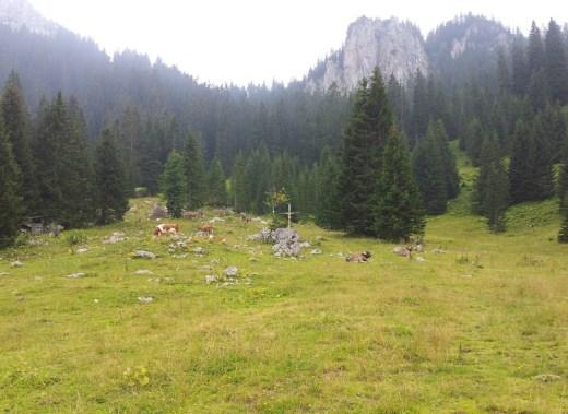 Blick vom Mühlbacher Älple auf die Berge und Kühe