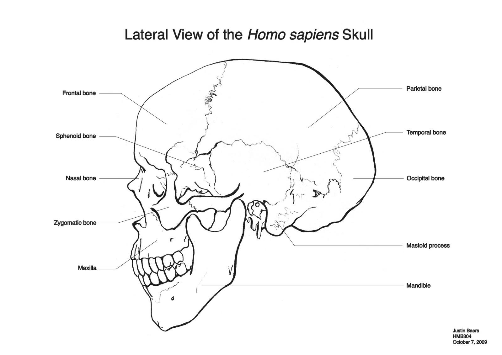 Strange Nostalgia For The Future Lateral View Of The Homo