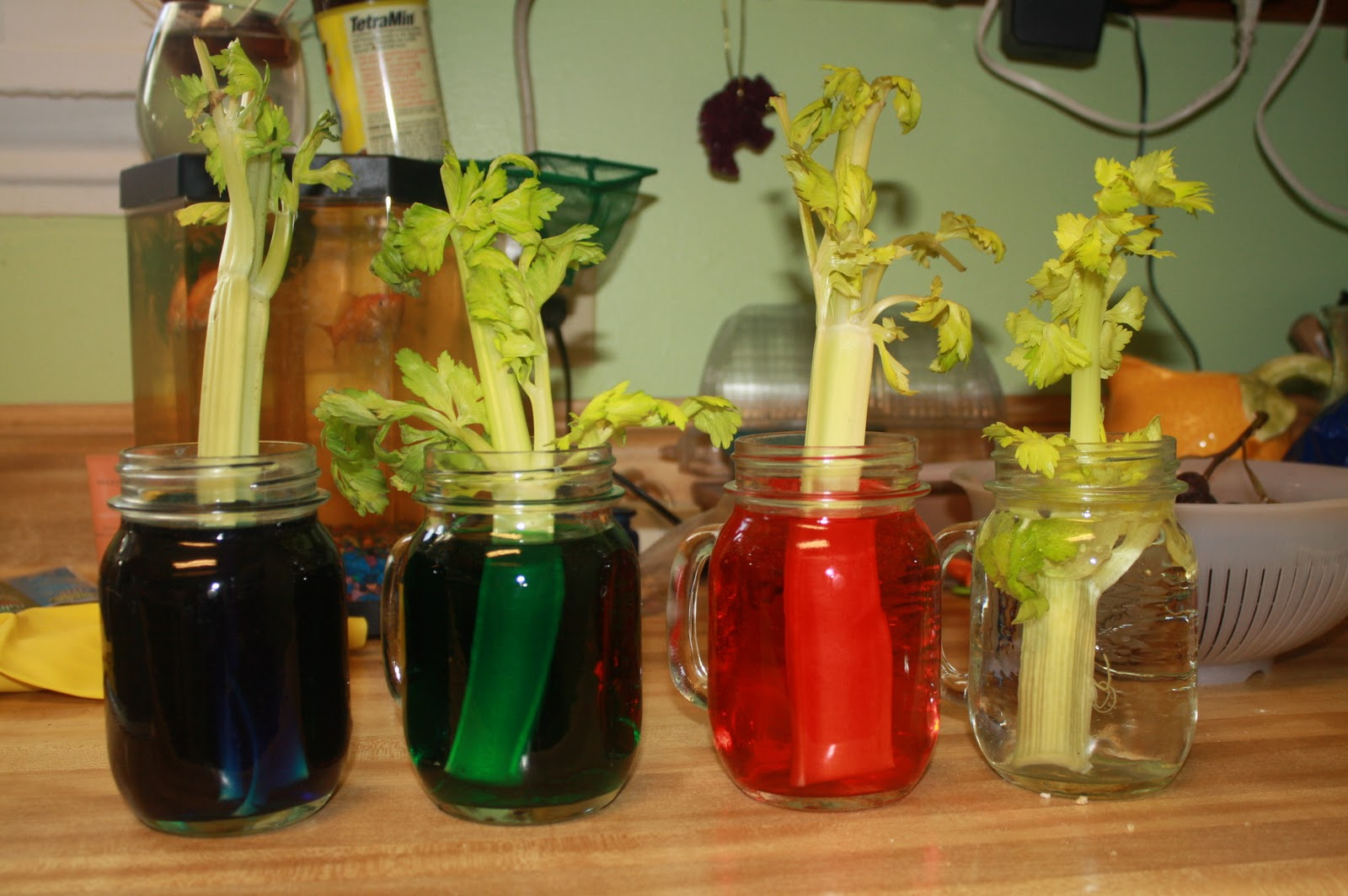 An Apple And A Tree Mini Project Monday 1 Celery Gets