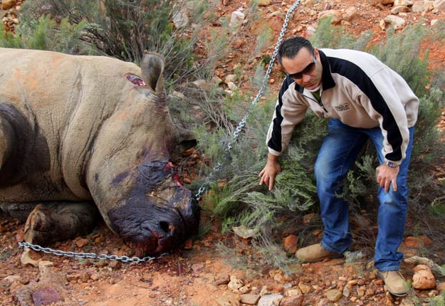 Rhinos in South Africa and Nature conservation