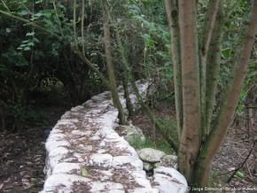 Jarillón del Humedal La Conejera