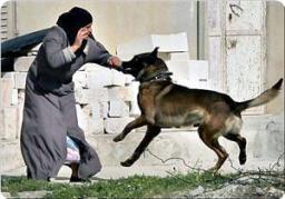 israeli attack dog assault palestinian woman