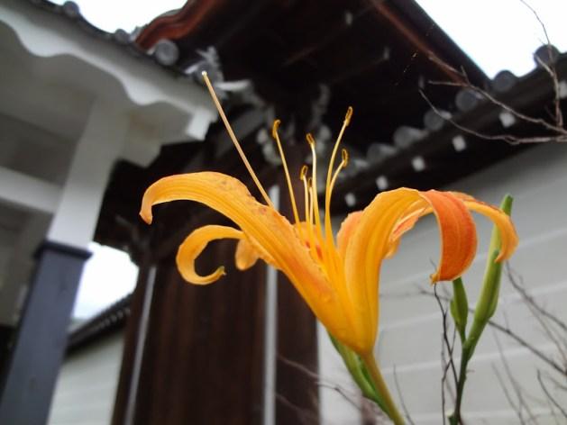 Orange flower near Japanese architecture