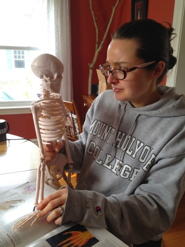 Skeleton model for Anatomy and Physiology I