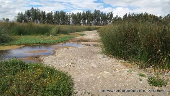 Sequía en el humedal Tibanica