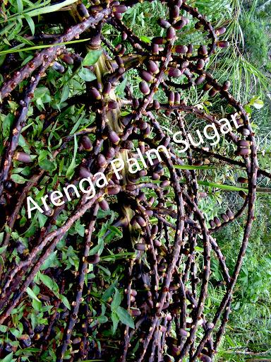 buah aren untuk sawah organik