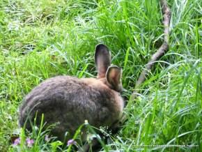 Cola y orejas del Conejo, Humedal La Conejera