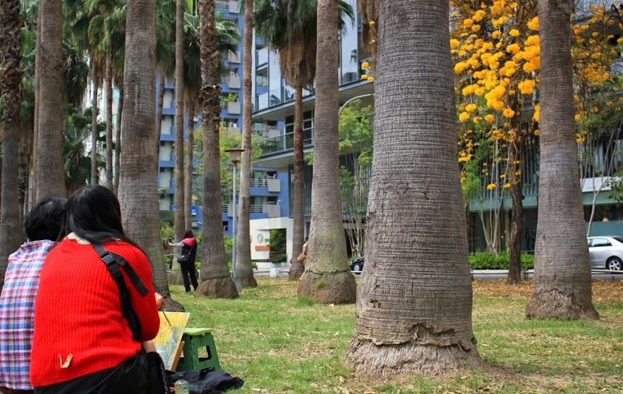 台南東區,黃花風鈴木