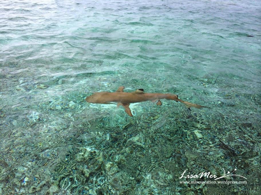 Bora Bora: Swimming With Sharks! (2/6)