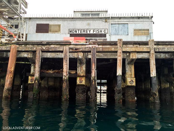 California Sea Lions at Monterey Fish Company.