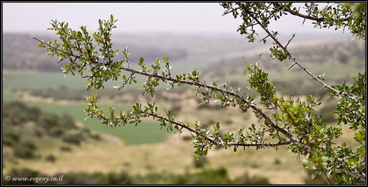 Бейт Гуврин