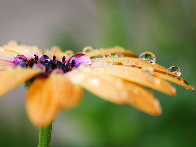 Water-Drops-on-Yellow-Flower