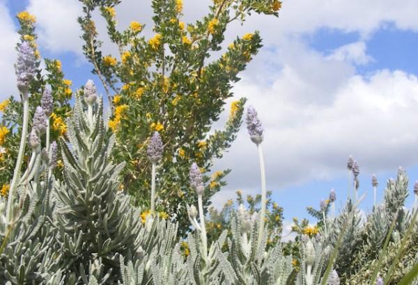 גוש אפור, מרשים לצד צמחים כהים, 'תת מן מאפיר' על רקע 'אספסת השיח'