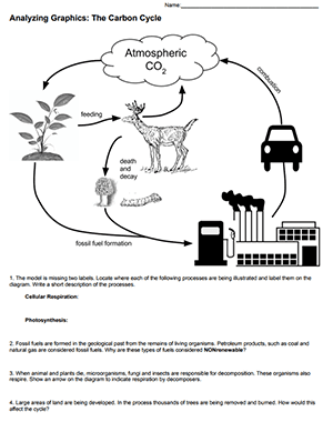 Analyzing Graphics The Carbon Cycle Worksheet Answer Key