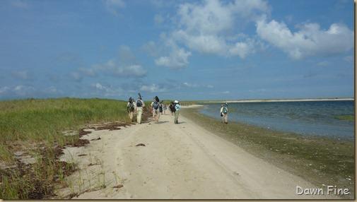 birding south beach_010 (1)