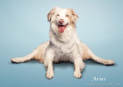 Anjing Senam Yoga (14)