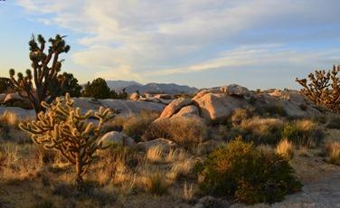 The Mojave_072