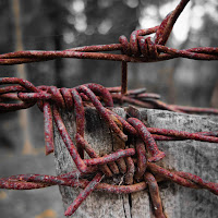 barbed-wire close-up