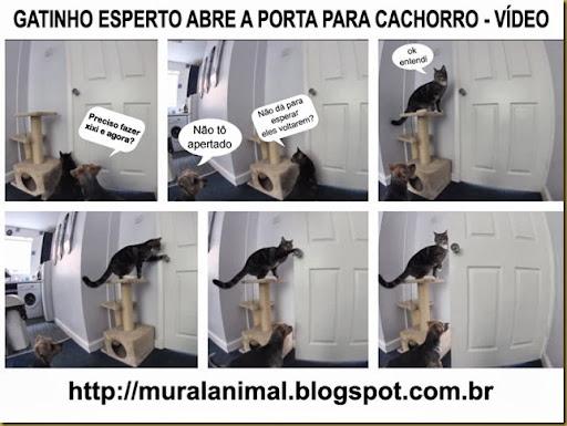gatinho_porta