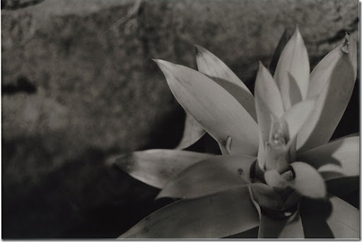 Botanical-Gardens-11-AP-56-Y-5-M-7
