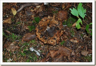 fungus 3