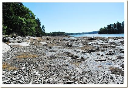 low tide coast
