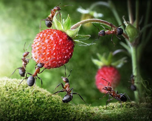Life-of-Ants-Andrey-Pavlov-03