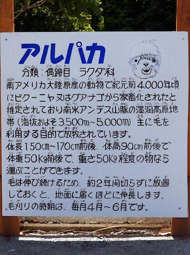 P5050431.JPG