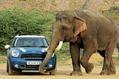 BMW-Mini-India-9