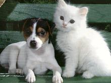 Cães vs Gatos